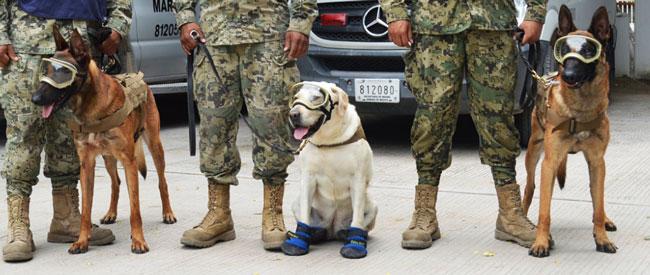 Organizan colecta de llaves para monumento a perros rescatistas