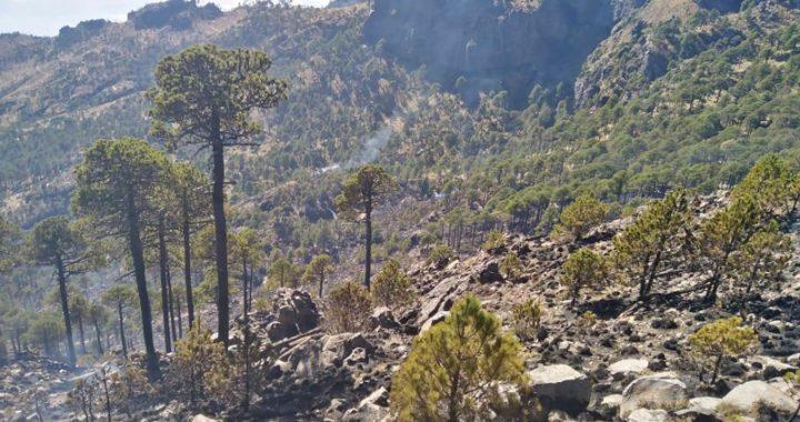 Extinguido el incendio en el Parque Nacional Cofre de Perote: PC
