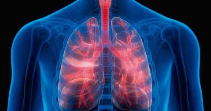 El sistema inmune sano, ¿nace o se hace?